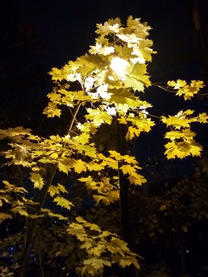 Осень в городе НН