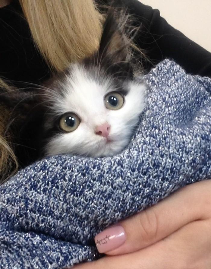 Милота кошачья Кот, Милота, Длиннопост, В добрые руки, Орск, Котята, Без рейтинга