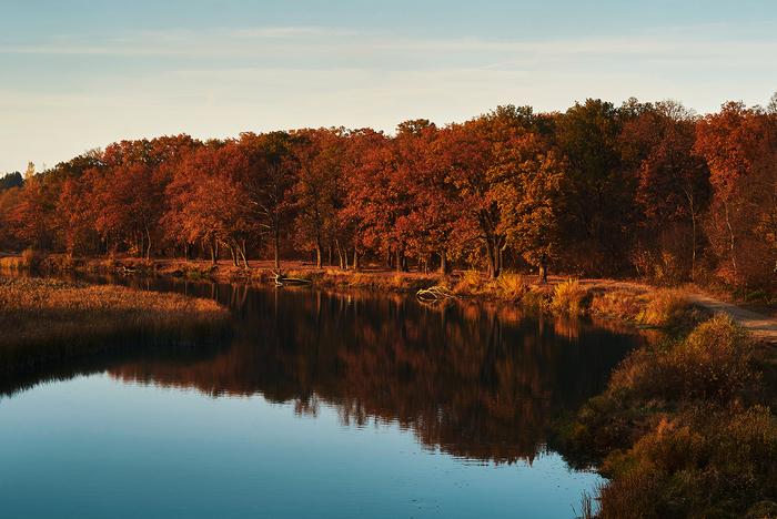Горят дубы. Лес, Река, Осень, Дубовая роща, Тишина