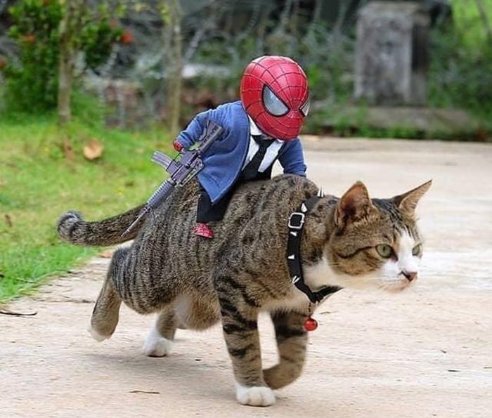 Человек паук верхом на коте