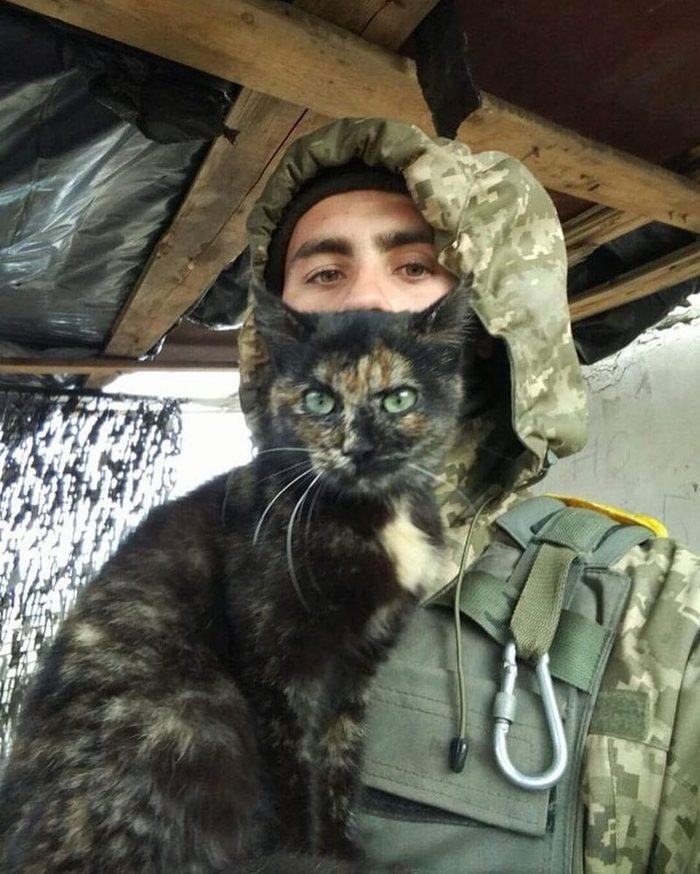 Бойцовый кот