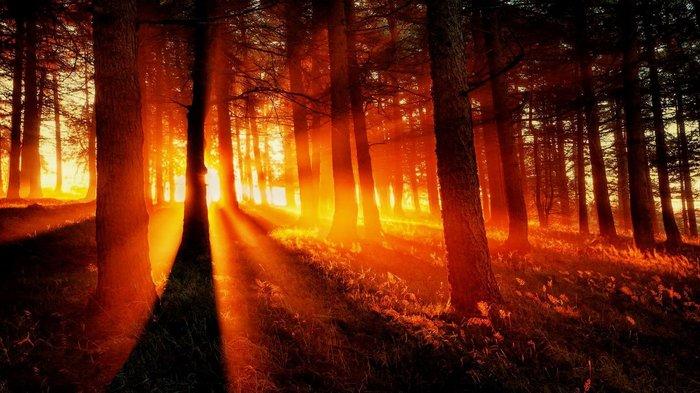 Рассвет и закат в лесу Лес, Природа, Рассвет, Закат, Игра света, Красота