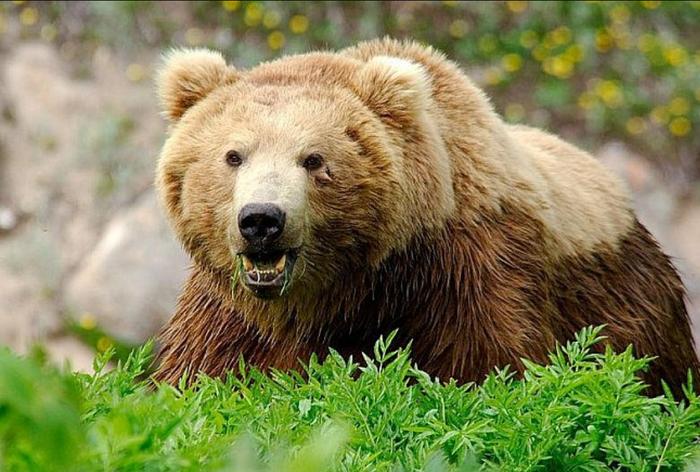 Про медведей. Медведь, Лес, Архангельская область, Случай из жизни, Много букв, Длиннопост