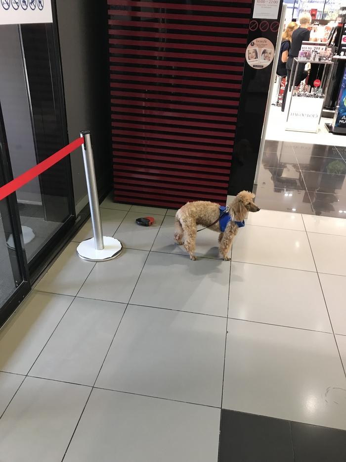 Доверие Собака, Поводок, Доверие