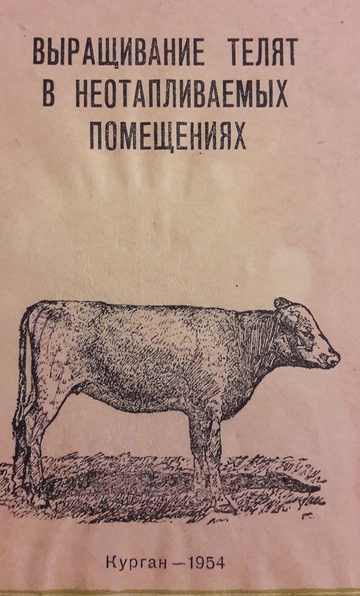 Некоторые эпизоды из жизни телят в начале 1950-ых СССР, Сельское хозяйство, Длиннопост