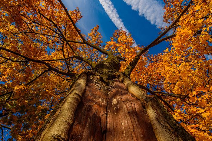 Потрясающая осень в Минске. Разница между фотографиями - неделя. Минск, Осень, Природа, Фотография