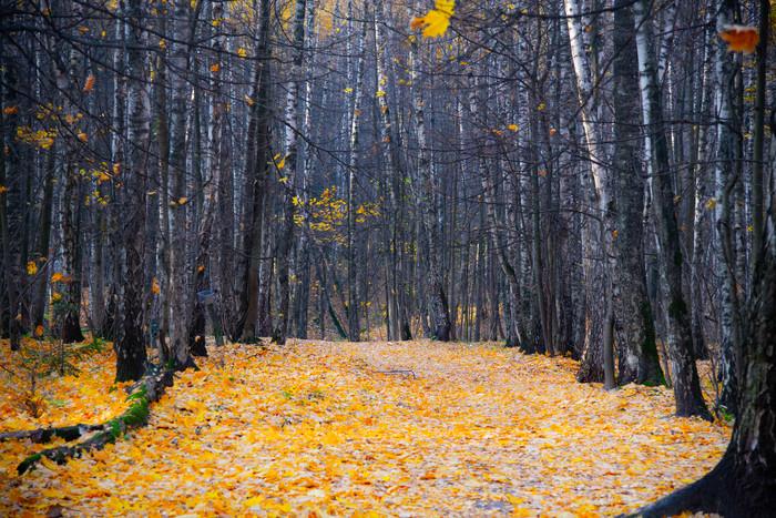 Осенняя Москва. Битцевский парк