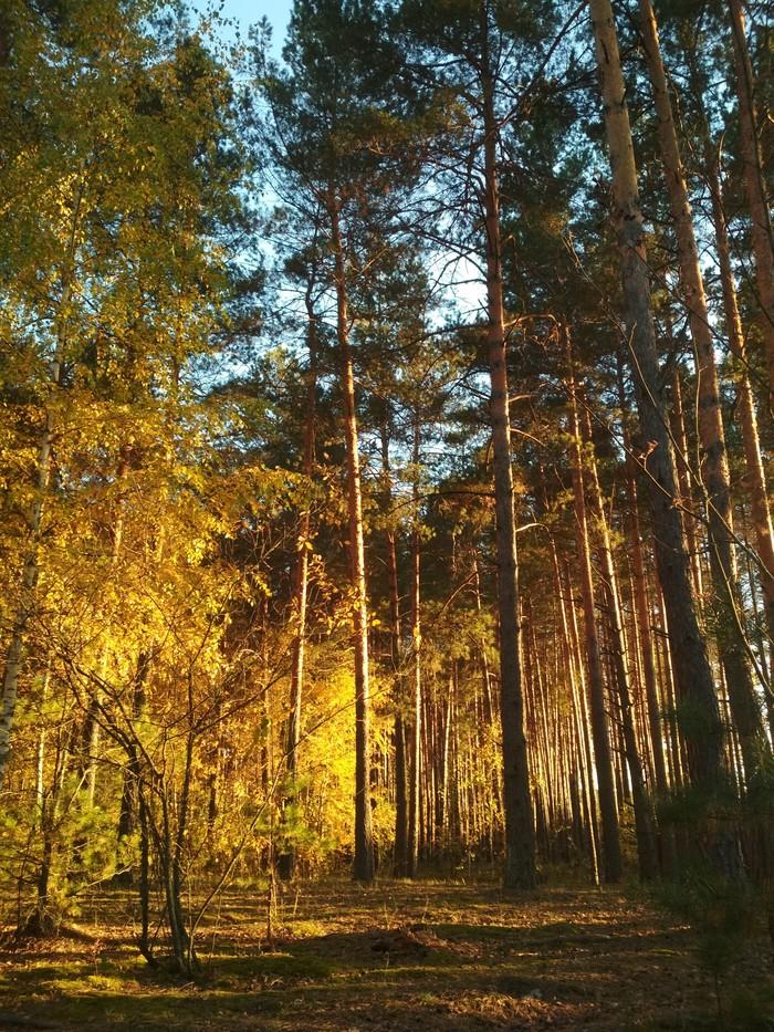 Осенние моменты Xiaomi, Осень, Цветы, Лес, Мухомор, Грибы, Парк, Время года, Длиннопост