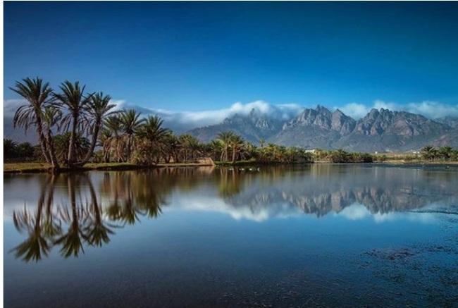Остров  Сокотра с самой уникальной природой на Земле Остров, Природа, Дерево, Сокорта, Йемен, Аравийский полуостров, Земля, Экзотика, Длиннопост