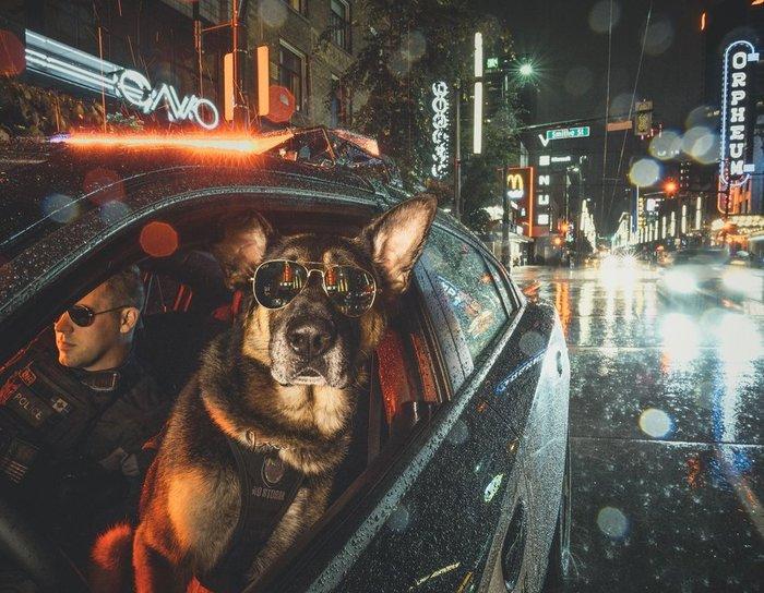Крутая фотка K9 и его кинолога Календарь, Ванкувер, Полиция, К9, Собака, Служебные собаки, Канада