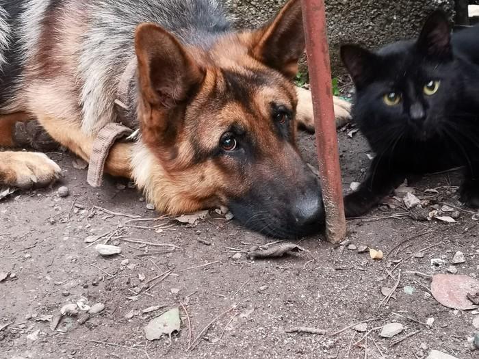 Кот и пес Кот, Собака, Фотография