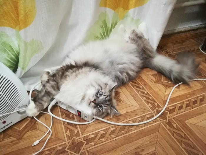 Что делать если кот обнимает удлинитель? Кот, Удлинитель, Непонятно, Длиннопост