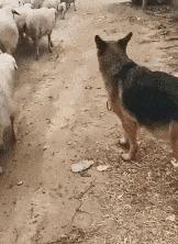 А ну, марш со всеми в общее стадо