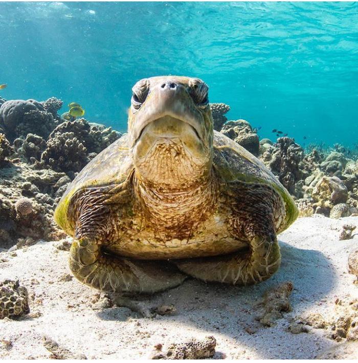 Деловая черепаха