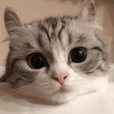 Гифка с котёнком