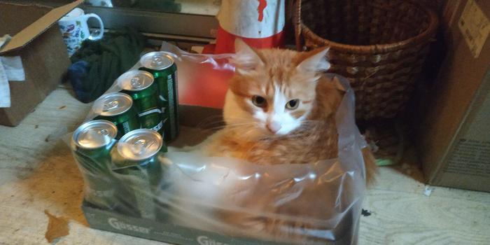 Коты... Кот, Пиво, Ящик