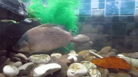 Покатай меня, большая рыбина
