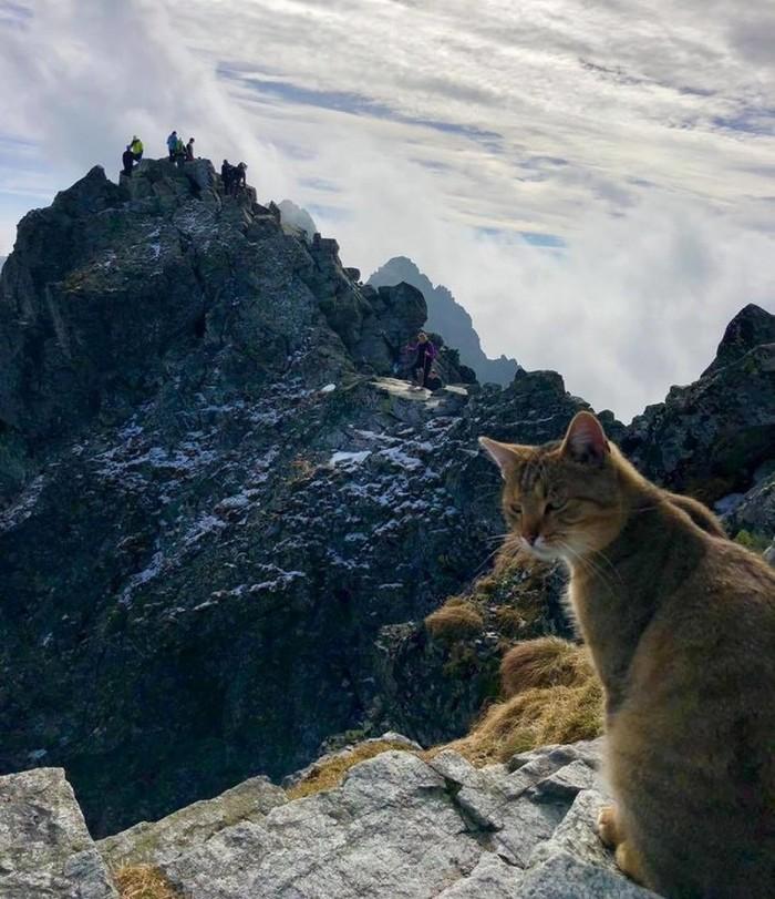 Вы кто такие, я вас не звал Кот, Горы, Альпинизм