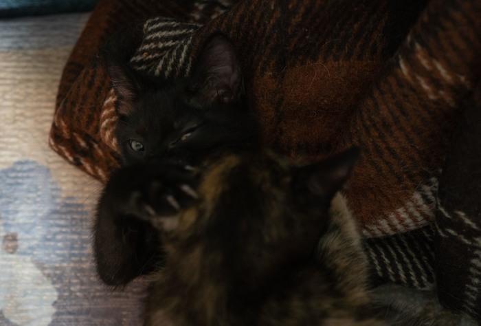 Веселый черный котей ищет себе хозяев. Кот, В добрые руки, Нижневартовск, Черный кот, Отдам, Гифка, Длиннопост, Без рейтинга