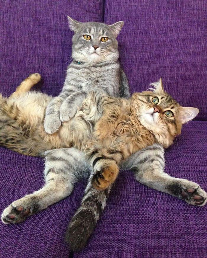 Уставшие пятничные коты
