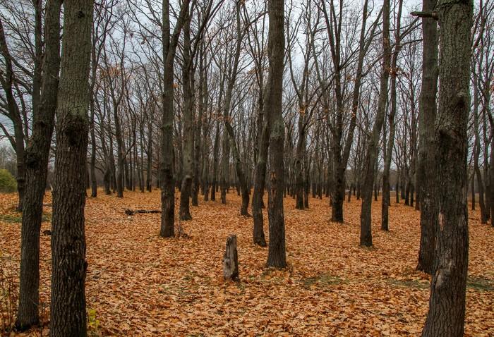 Мрачная осень Длиннопост, Дзержинск, Осень, Фотография, Canon 1300d