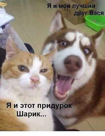 Мнение о дружбе может быть разное...