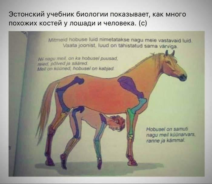 Биология по-эстонски