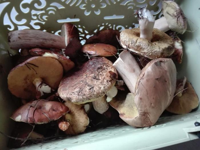 Последние грибы в этом году Грибы, Вопрос, Октябрь, Длиннопост