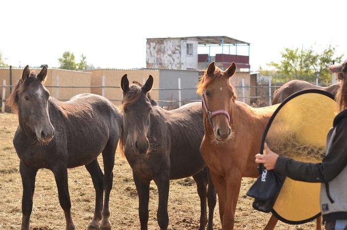 Лошади и фотографии. Для конников. Фотосессия, Кони, Лошадь, Интересное, Фотограф, Модель, Длиннопост