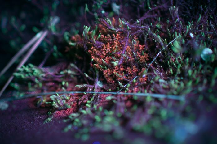 Фотография в ультрафиолете, проба... Ультрафиолет, Фотография, Начинающий фотограф, Флуоресценция, Uvivf, Длиннопост