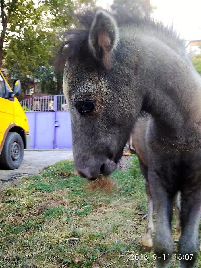 Пони тоже любят стесняться ^^