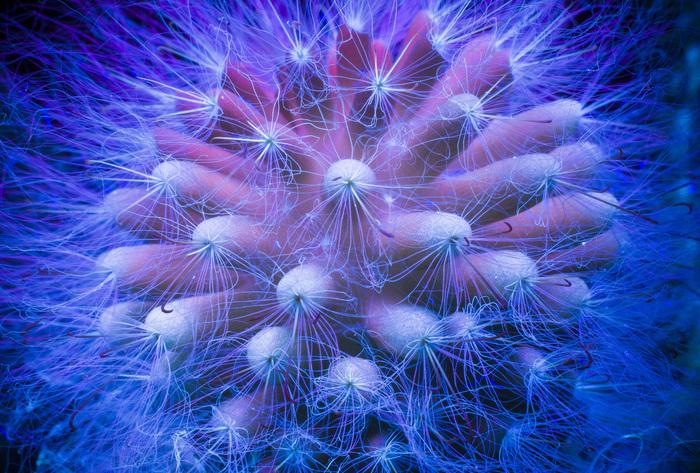 Фотография в ультрафиолете, проба №2 Ультрафиолет, Фотография, Лига фотографов, Начинающий фотограф, Флуоресценция, Uvivf, Цветы, Длиннопост