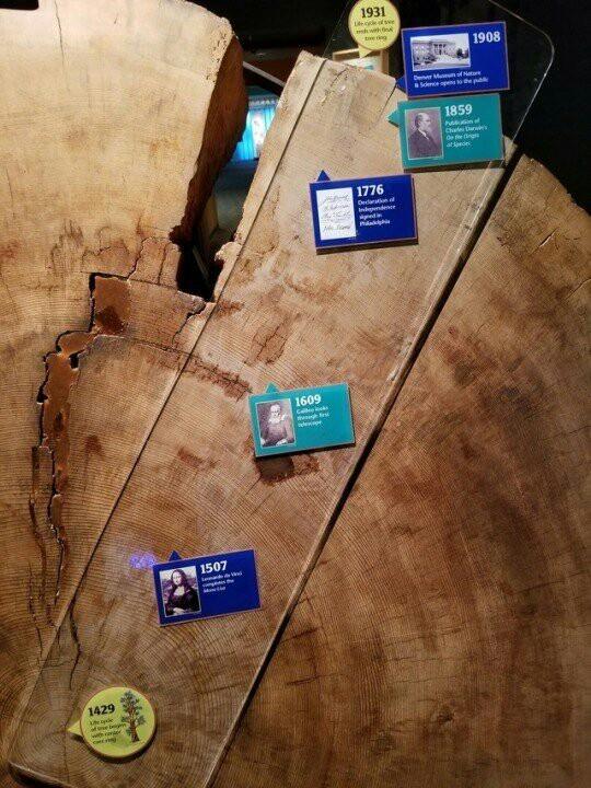 """Что """"помнит"""" 500-летнее дерево. Из экспозиции Естественнонаучного музея Денвера."""