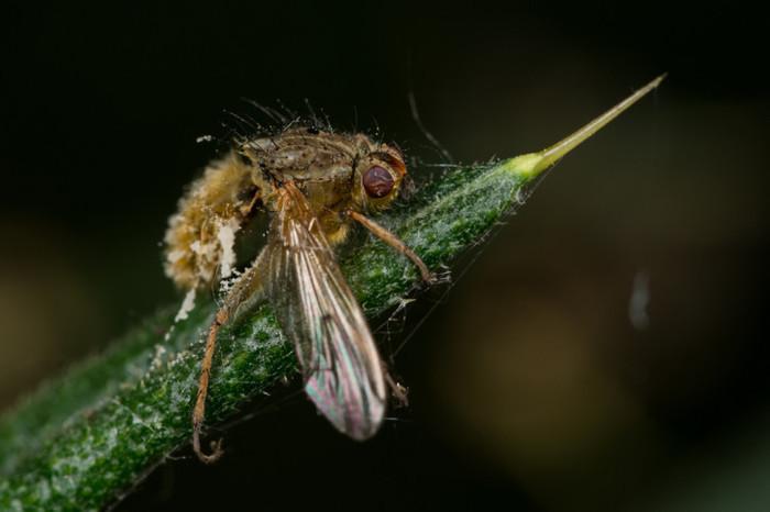 Могут ли грибы-паразиты прижиться в человеке, и как животные умнеют от паразитов Паразиты, Микробы, Опасность, Грибы, Наука, Длиннопост