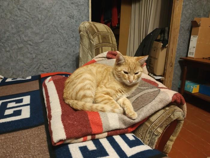 Удобство Кот, Кровать, Удобство