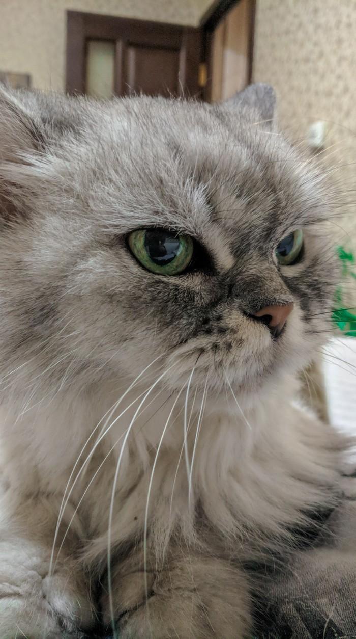 Виолетта - 18 лет Кот, Котомафия, Старость, Длиннопост