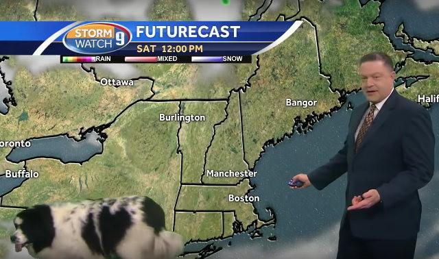 Собака на площадке во время съемок прогноза погоды. Собака, Прогноз погоды, Ведущий, Телевидение, США, Видео