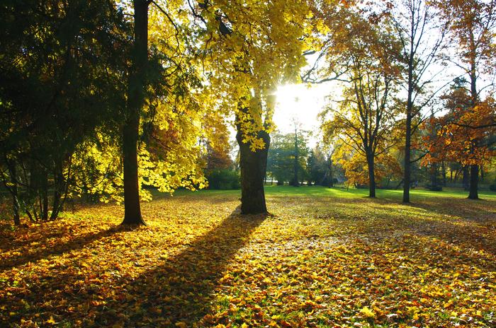 Золото на Елагином острове. Фотография, Осень, Санкт-Петербург, Елагин остров, Пейзаж, Солнечно, Длиннопост