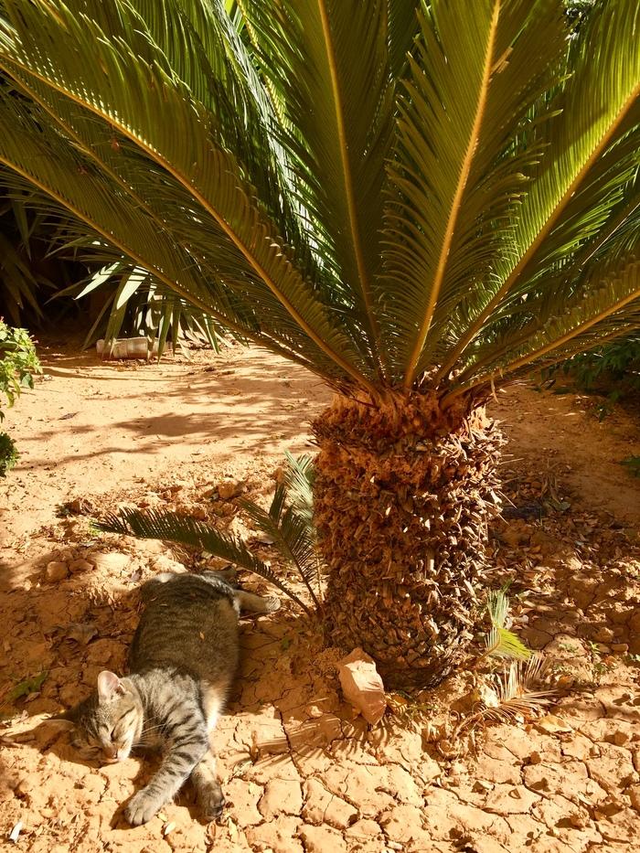 Осенний Кот Осень, Пальмы, Кот