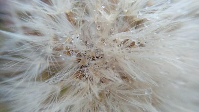 Просто поделиться своими фотографиями. Природа, Осень, Паук, Фотография, Длиннопост