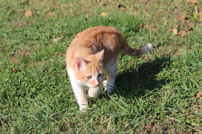 Наш любимец Кот, Домашний любимец, Усатый-Полосатый, Питомец, Длиннопост