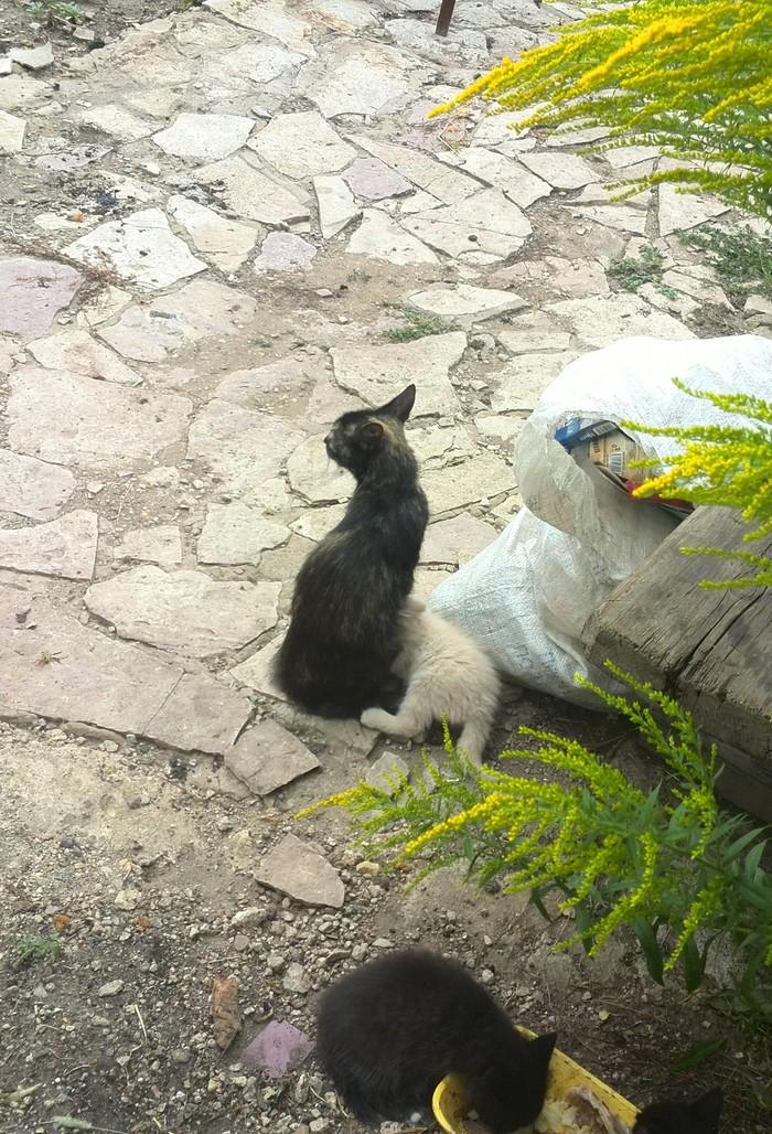 Кошачья забота Животные, Домашние животные, Кот, Грусть, Длиннопост