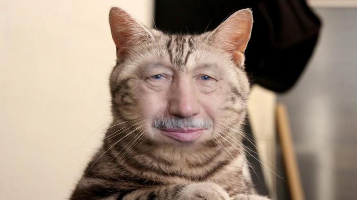 Котиков любят все! Флешмоб, Знаменитости, Фотография, Длиннопост, Кот