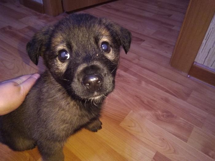 Найден щенок. Отдам в хорошие руки Москва, Московская область, Без рейтинга, Найдена собака, В добрые руки, Собака, Помощь животным