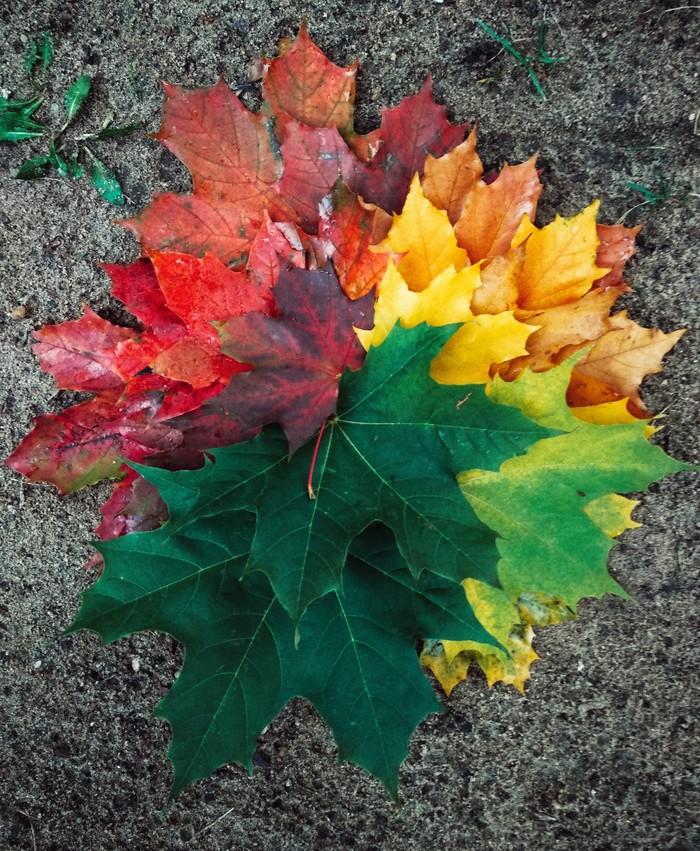 Палитра клёна Осень, Клен, Палитра
