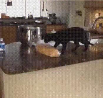 А у вас хлеб свежий?