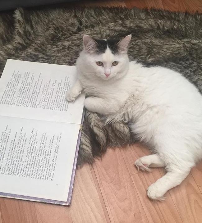 Пропал кот! Без рейтинга, Кот, Помогите найти, Казахстан, Алматы, Помощь