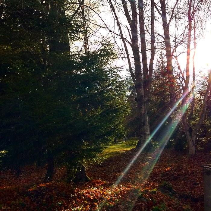 Осенний день в Репино.