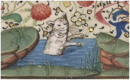 Что то мы не знаем о котах средневековья... Кот, Гравюра, Длиннопост, Страдающее средневековье