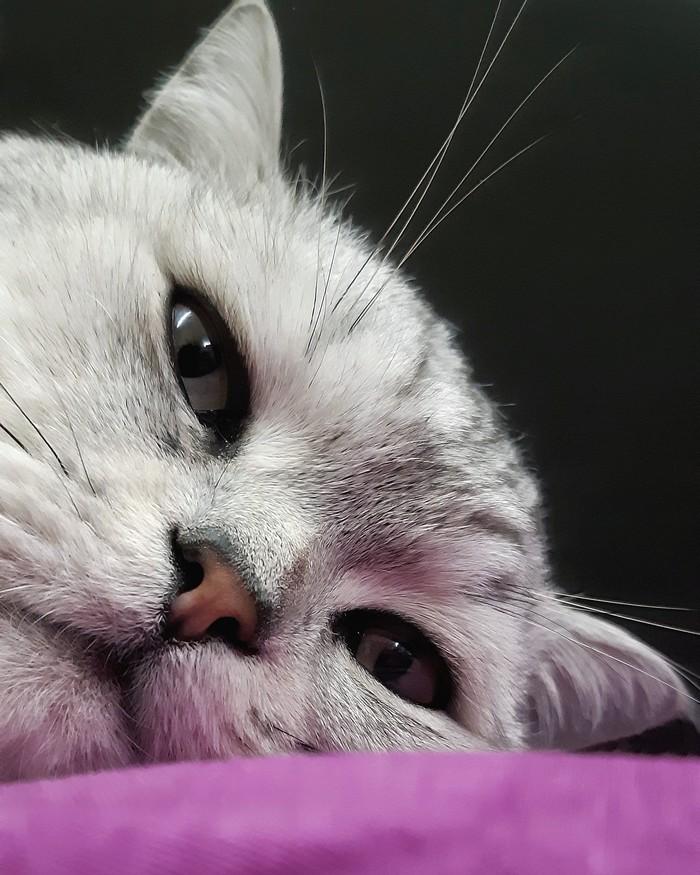 Задумался.. Кот, Котомафия, Фотография